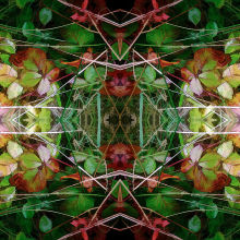 Autumn Symmetry 3