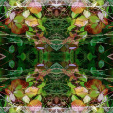 Autumn Symmetry 4