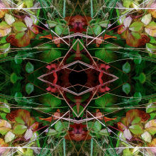 Autumn Symmetry 5
