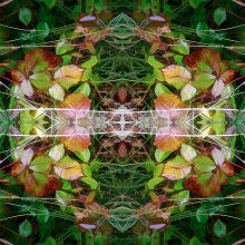 Autumn Symmetry 6