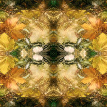 Autumn Symmetry 13
