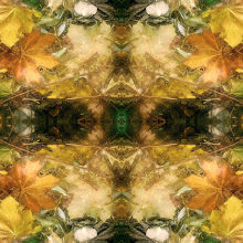 Autumn Symmetry 14